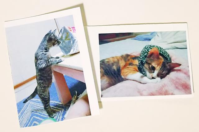 ご来場者さんにプレゼントしていただいた猫ちゃんの写真